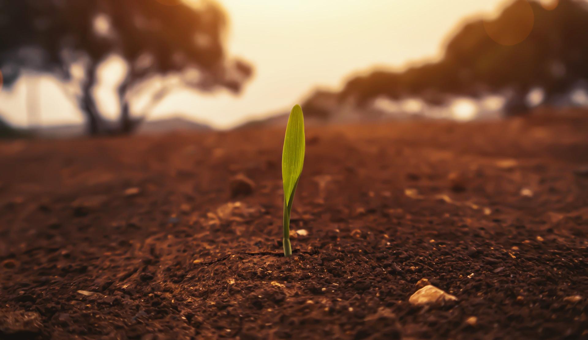 Božie kráľovstvo rastie ani nevieme ako! Viac v komentári Božieho Slova na 11. cezročnú nedeľu
